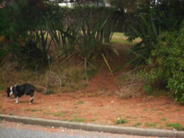 Wandering dog.