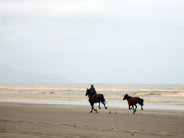 Horses on Waikawa Beach.