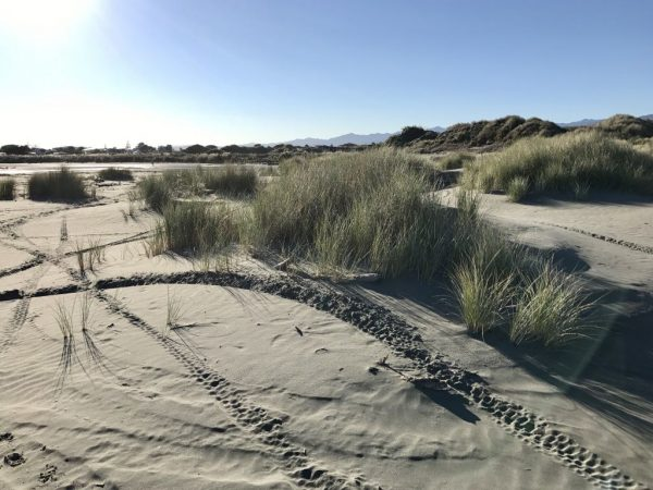 Trailbikes gouge the fragile dunes. Photo 23 August 2017 08:51.
