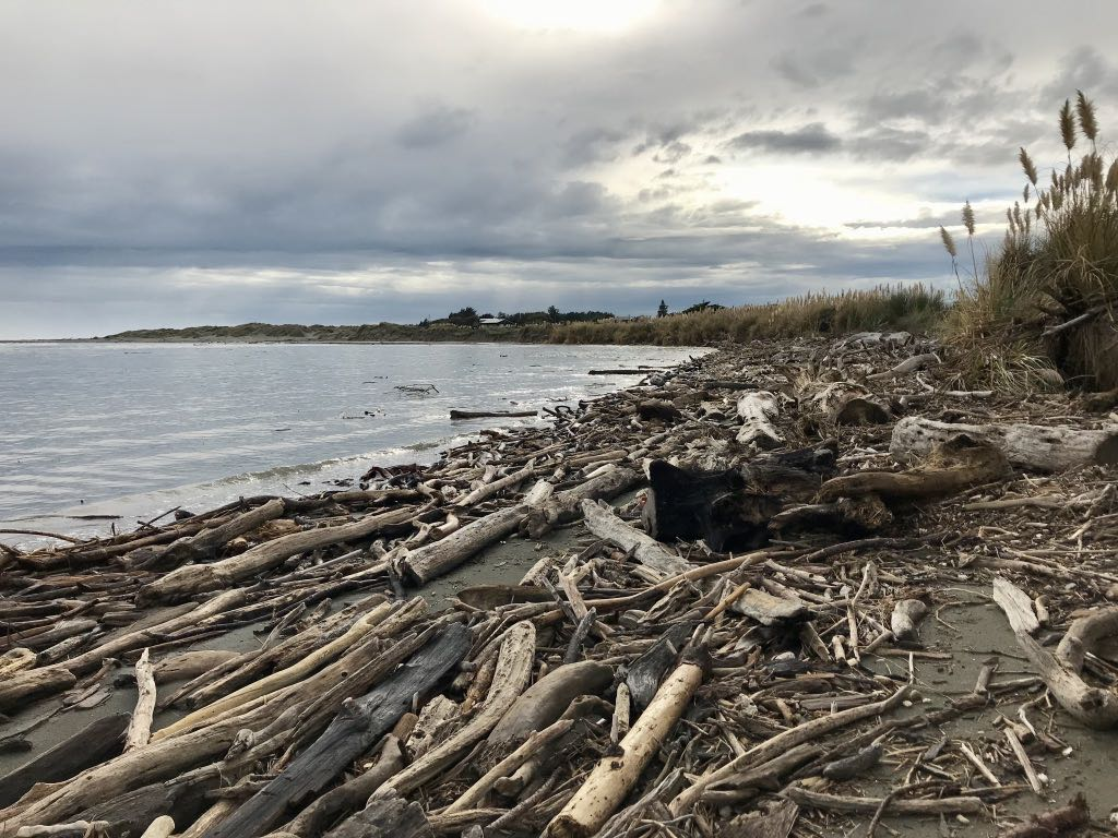 Driftwood in the estuary.