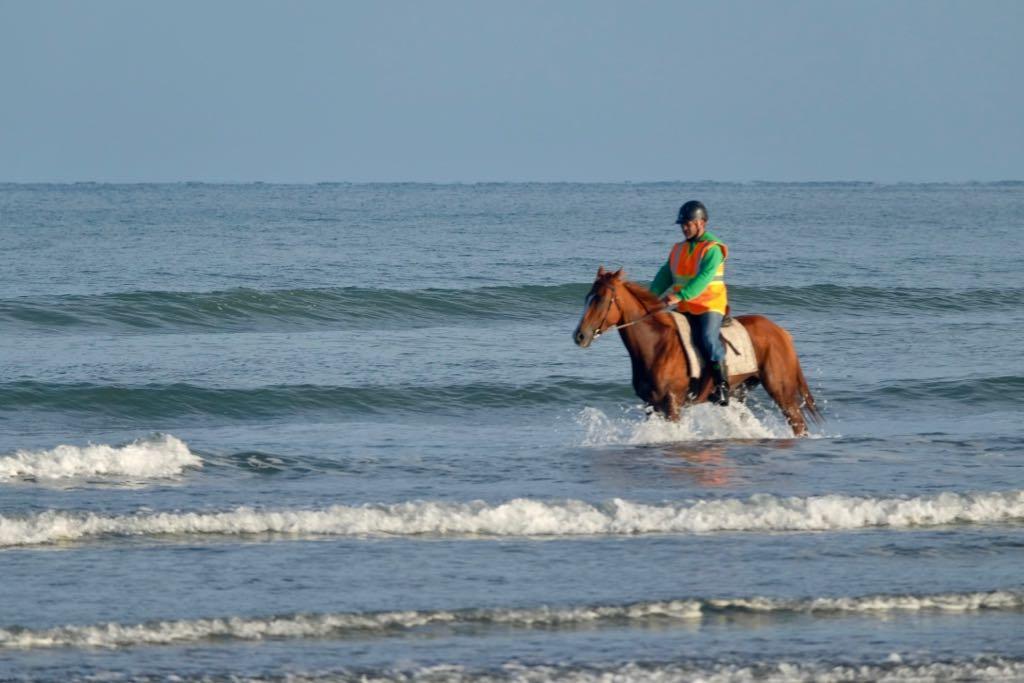 Horse and rider at Waikawa Beach.