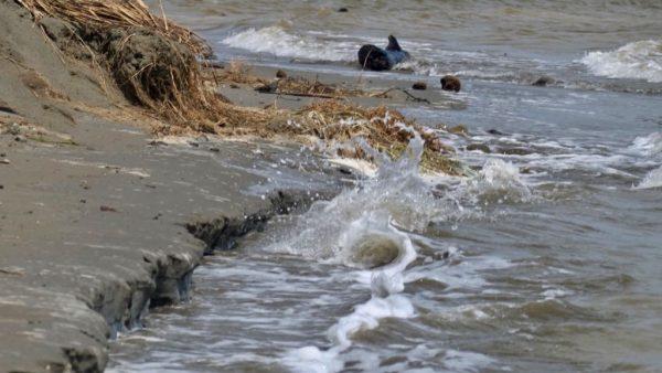 High tide after ex TC Gita.