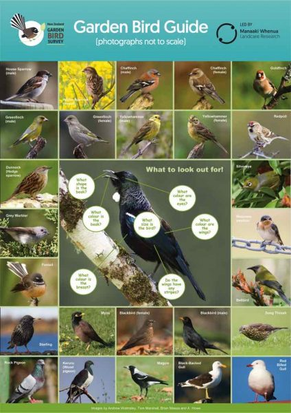 Bird identification chart.