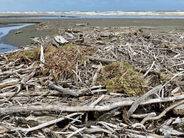 Garden waste dumped at Waiorongomai Stream.
