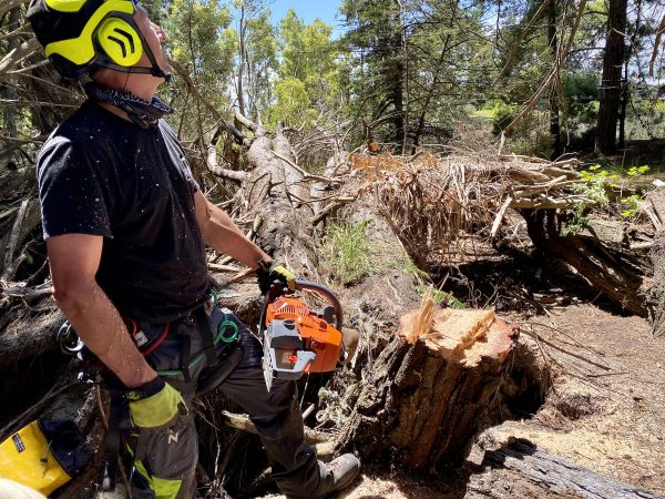 Man with chainsaw standing by the tree stump.
